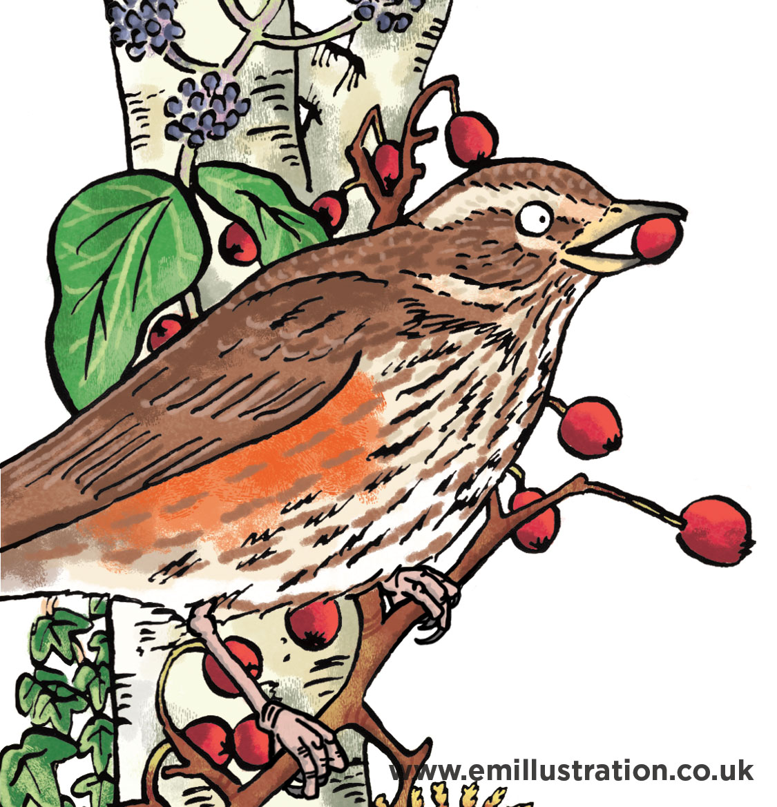 colourful simple hand drawn cartoon illustration of a redwing bird by children's educational wildlife illustrator emma metcalfe
