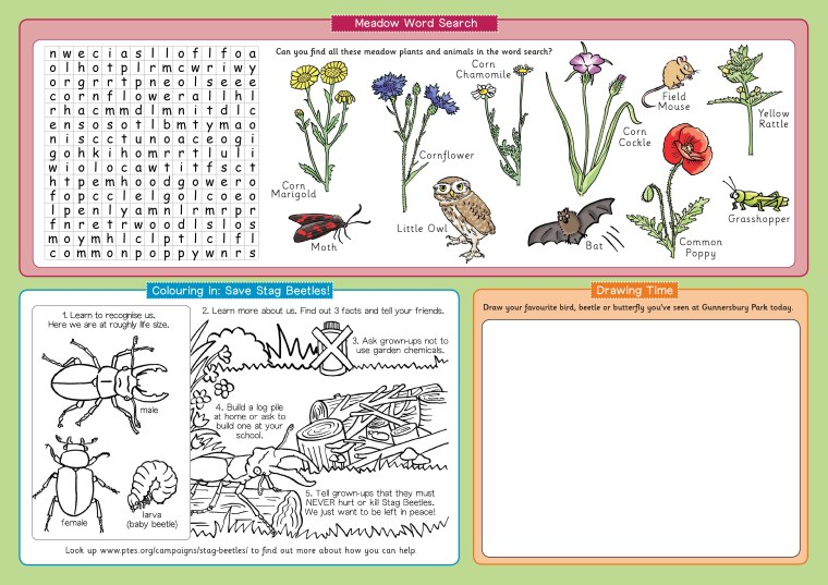 Illustrated stag beetle colouring picture and wildflower meadow wildlife word search children's activities by illustrator Emma Metcalfe